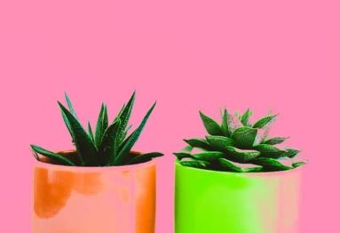 succulents in colourful pots